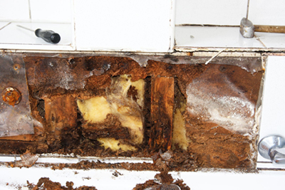 mold buildup under tiles
