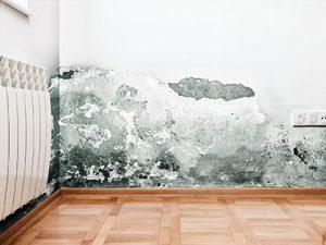 mold on wall