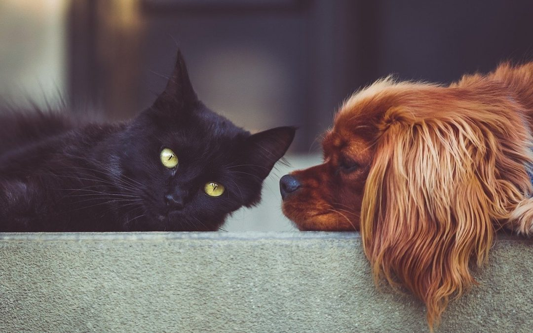 How To Keep Your Pets Safe During a Home Emergency
