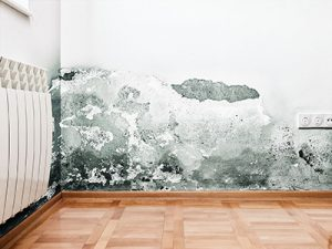 image showing mold on wall