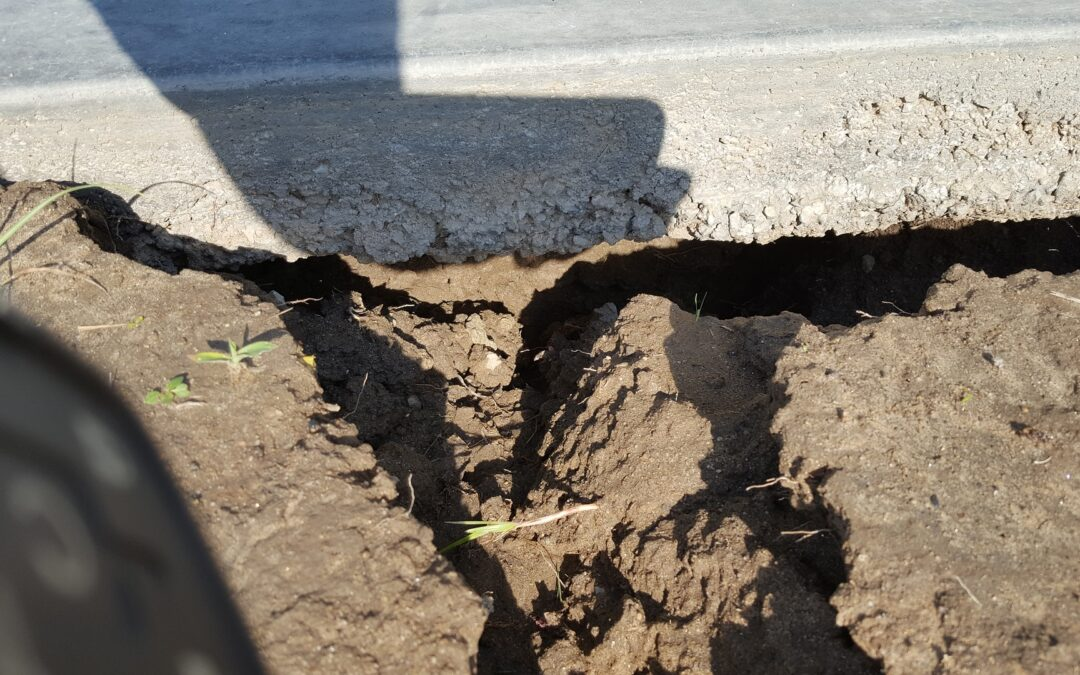 Tree Roots Damage Home Foundation