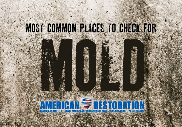 Most Common Places to Check for Mold in a Home