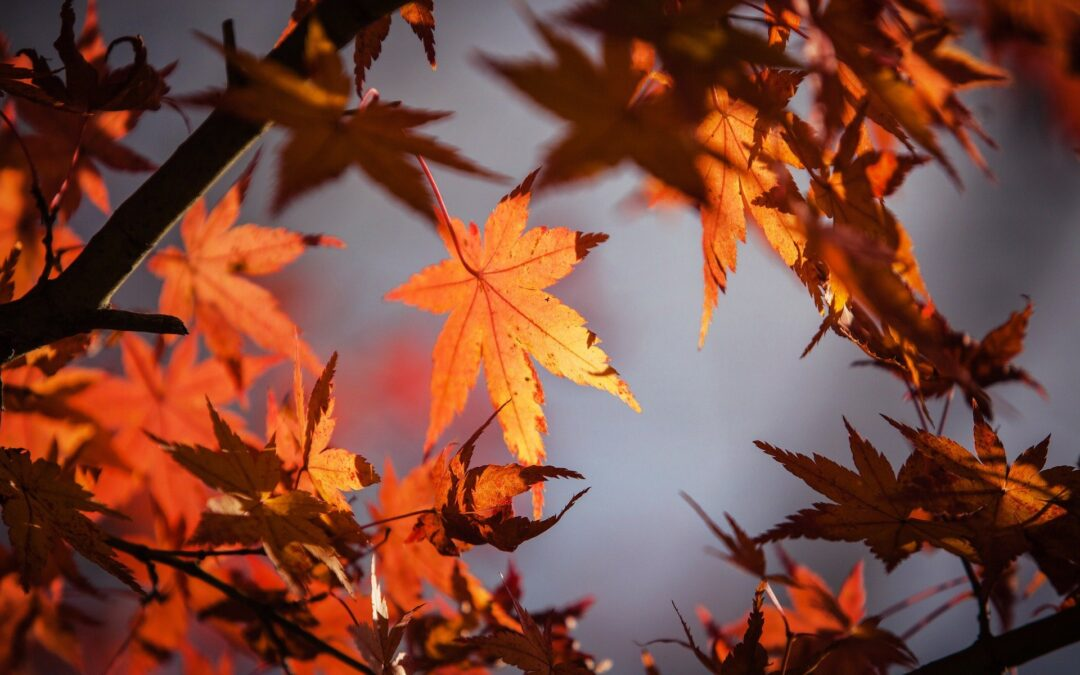 Dry Leaves & Fire Hazards